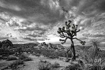 Photograph - Joshua Tree National Park by Charline Xia