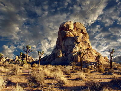 Photograph - Joshua Tree National Park by Glenn McCarthy Art and Photography
