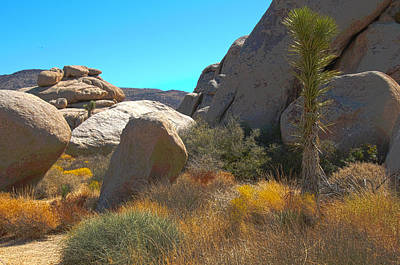 Photograph - Joshua Tree National Park by Penny Lisowski