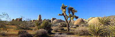 Joshua Tree National Park, Spring Art Print