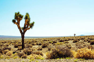 Photograph - Joshua Tree by Nicholas Blackwell