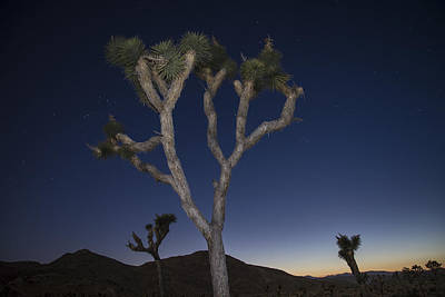 Photograph - Joshua Tree Night 2 by Lee Kirchhevel