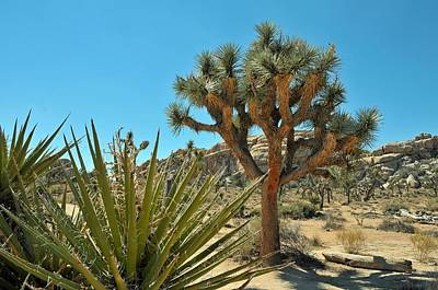 Photograph - Joshua Tree Np by Paul Van Baardwijk
