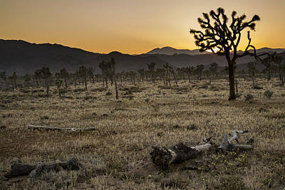 Photograph - Joshua Tree Sunset 3 by Lee Kirchhevel