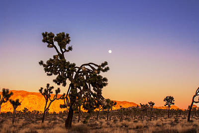 Photograph - Joshua Tree Sunset And Moonrise by Kunal Mehra