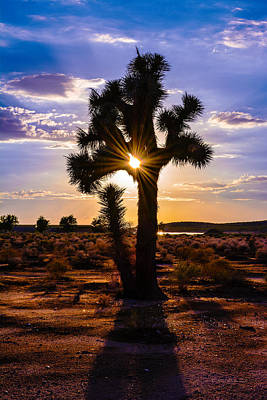 Design Turnpike Vintage Maps - Joshua Tree Sunset by Brian Tada