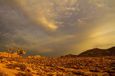 Photograph - Joshua Tree Sunset by Kunal Mehra