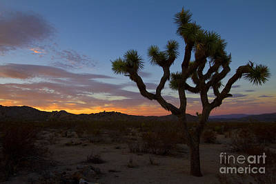 Photograph - Joshua Tree Sunset by Photography by Laura Lee