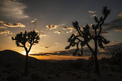 Photograph - Joshua Tree Sunset Silhouette 2 by Lee Kirchhevel