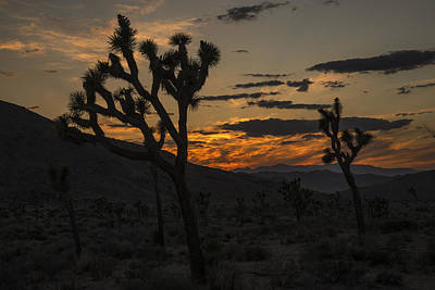 Photograph - Joshua Tree Sunset Silhouette 3 by Lee Kirchhevel