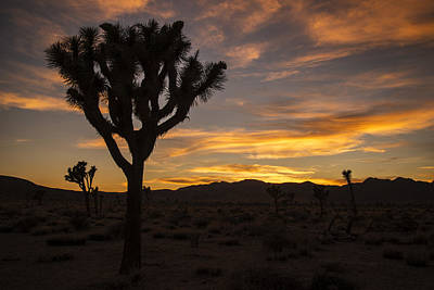 Photograph - Joshua Tree Sunset Silhouette 5 by Lee Kirchhevel