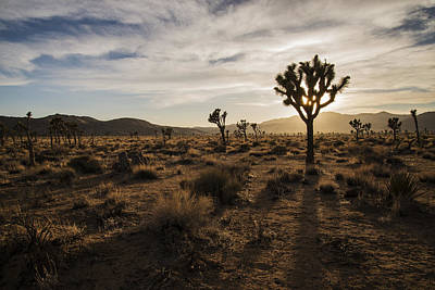 Photograph - Joshua Tree Sunset Silhouette by Lee Kirchhevel