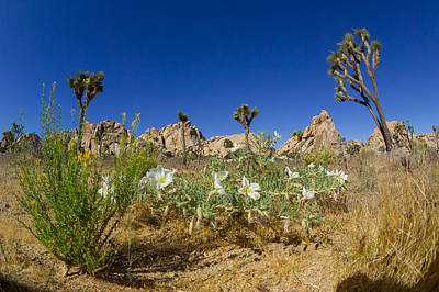 Photograph - Joshua Trees And Desert Flowers by Scott Campbell