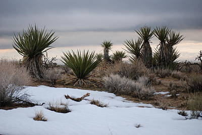 Joshua Trees And Snow Art Print by Pamela Schreckengost