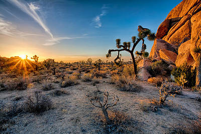 Joshua Tree Np Photograph - Joshua's Sunset by Peter Tellone