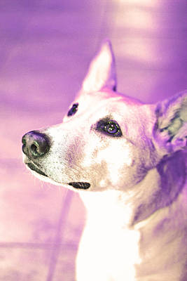 Josie In Purple Art Print