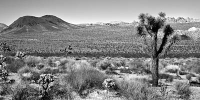 Joshua Tree Np Photograph - Josua Tree - Geology Tour Road by Peter Tellone