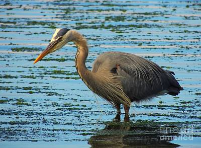 Photograph - Josy's Heron by Lisa Conner