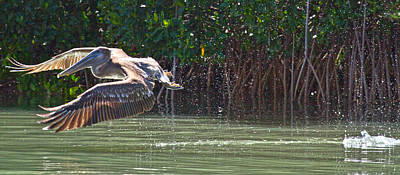 Brown Pelican Photograph - Journey by Betsy Knapp