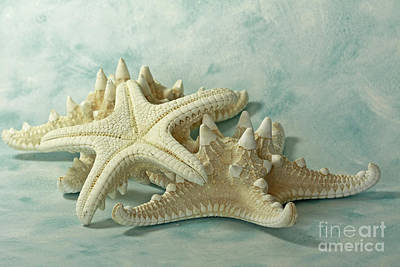Journey To The Sea Starfish Art Print