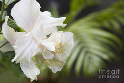 Of Flowering Palm Tree Photograph - Joy Follows by Sharon Mau