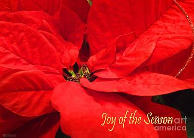 Photograph - Joy Of The Season by Lizi Beard-Ward