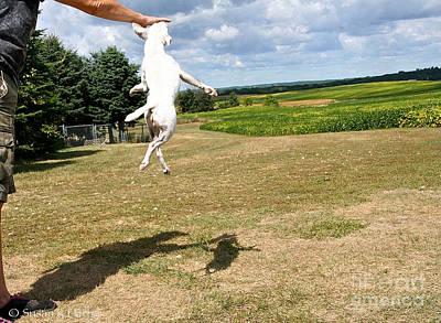 Photograph - Jrt Ballet by Susan Herber