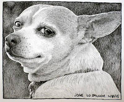 Chihuahua Drawing - Jose by Lorraine Zaloom