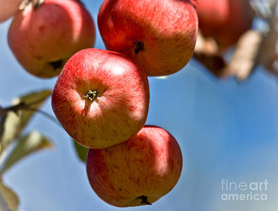 Photograph - Juicy Harvest by Cheryl Baxter