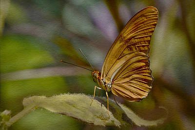 Photograph - Julia Longwing Butterfly by Ann Bridges