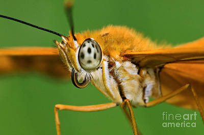 Photograph - Julia Butterfly - D003853 by Daniel Dempster