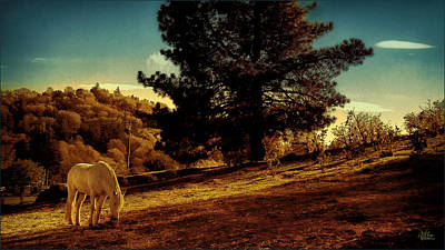 Photograph - Springtime California Landscape by Douglas MooreZart