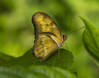 Photograph - Julias Butterfly by Sean Allen