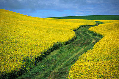 Contour Farming Photograph - July Canola by Latah Trail Foundation
