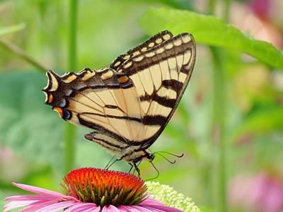 July Swallowtail Art Print