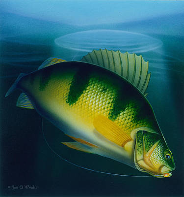 Jumbo Perch Ice Fishing Art Print by Jon Q Wright