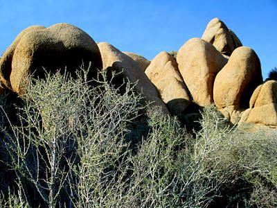 Photograph - Jumbo Rocks At Joshua Tree 1 by Randall Weidner
