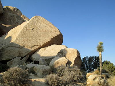 Photograph - Jumbo Rocks At Joshua Tree 5 by Randall Weidner