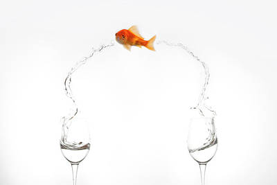 Goldfish Photograph - Jump! by Jose Beut