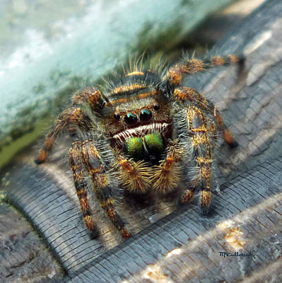 Photograph - Jumper Spider 3 by Duane McCullough