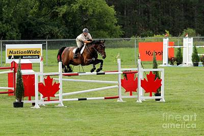 Jumping Canadian Fence Art Print