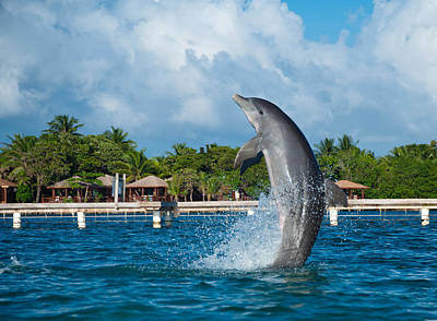 Dolphine Photograph - Jumping Dolphin by Zina Zinchik