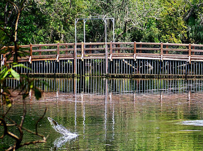 Photograph - Jumping Fish by Judy Wanamaker