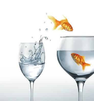 Goldfish Photograph - Jumping Goldfish by Leonello Calvetti/science Photo Library