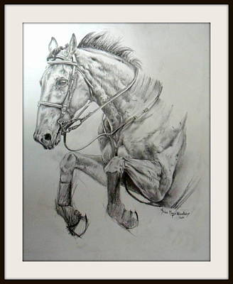 Recently Added Drawing - Jumping Horse II by Arion Khedhiry