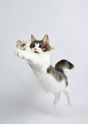 Jumping Kitten Art Print by Ryuichi Miyazaki