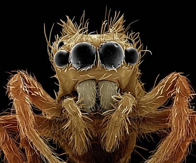 Jumping Spider Art Print by Clouds Hill Imaging Ltd