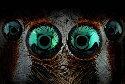 Spider Wall Art - Photograph - Jumping Spider Eyes by Javier Rup?rez