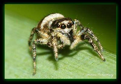 Photograph - Jumping Spider by Michaela Preston