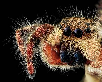 Jumping Spider Print by Us Geological Survey